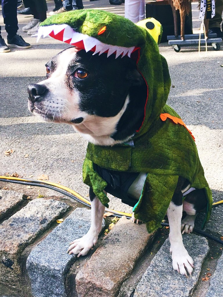 Dog crocodile costume at Fort Greene Park