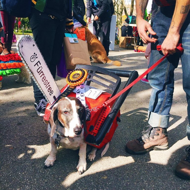 Dog in fancy dress as a chainsaw in Brooklyn at Halloween