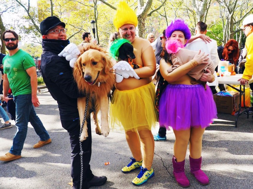 Brooklyn dog fancy dress - PUPkin Parade for Halloween